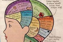 Child development / Understanding how children develop, particularly their brain, helps parents to establish realistic expectations for their children.