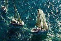 Sea Life: Sailing