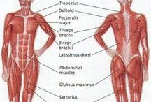 [Human body]