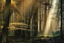 Sensações / Natureza simples e bela, muitos encantos, sensações extraordinárias!!