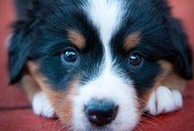 Puppy puppy dog!