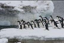 ★ Antarctica ★