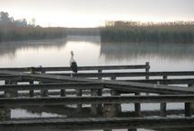 """Neusiedlersee / Rust, Drehort und Schauplatz vom """"Der Winzerkönig"""""""