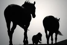 Beautiful Horses / Horses are so beautiful!! / by Debra Hill