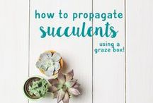 DIY | graze / Everything you love to start getting crafty!