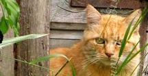 Gatti Nel Mondo / Meravigliose e sorprendenti immagini dei gatti incontrati durante i nostri viaggi...