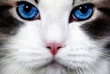 Funny Cats And Animal's / fun beautiful animals