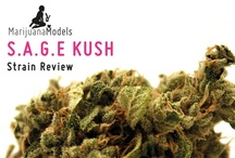 Strain Reviews