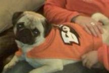OSU's Four-Legged Friends / Dogs and cats are a part of your family. So they're OSU fans too. Here's a board with images of dogs and cats in Beaver gear. / by Oregon State Athletics