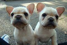 Puppies  / Cuteeee
