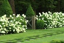 exterior design / gardens and exterior home design / by Nancy Harvey