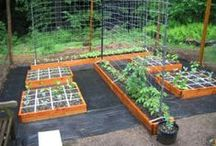 Gardening / helpful to green fingers / by Sally Rault