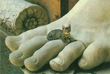 meow...cats!