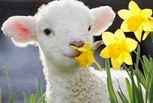 Spring Has Sprung / Everything we love about the spring season and the celebration of Easter can be found here