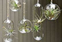 Plant / by Lobelola