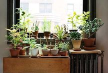 PLANTS at Home / Interior plant life, window boxes, gardens & yards