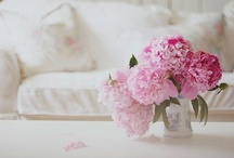 {peonies} / by ☽.Maho Spencer.☾