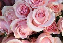 pink / ピンク色のもの、景色。