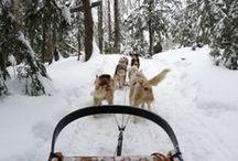 Canada / Forêts immenses, chiens de traîneau et lacs... Enfilez gants et bonnets, nous nous envolons vers le Canada !