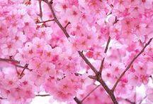 Look Book Spring / Fashion Exclusive Lente Fashion Trends & Inspiratie /// Fashion Exclusive Spring Fashion Trends & Inspiration >>> www.fashionexclusive.nl <<<