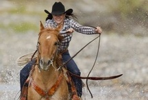 horses, my love