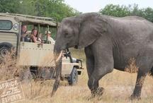 """Botswana-Africa Experts  / African Experttien safari Botswanan viidakoissa ja savaneilla. Siellä on kaikki mahdollisuudet nähdä """"big five"""" eli viisi suurta Afrikan maaeläintä sekä mantereen värikkäitä ja ilmeikkäitä vesilintuja."""