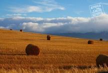 Roadtrip - Etelä-Afrikka - Africa Experts / Etelä-Afrikan kiertomatkalla näet suuren maan vaihtelevan luonnon ja maisemat.