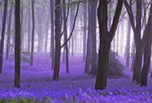 gentle places ...... / Places that make you feel good just looking at the images. Places to unwind, relax and dream.