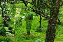 in the woods and forests ...... / A woodland or forest that embraces nature with sculptures and land art is an amazing place to be.  I have also set up a board related to forest and woodland floors. Sometimes it is hard to decide which board to pin to as there is inevitably some overlap.