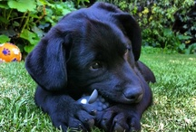 Lloyd / My dog