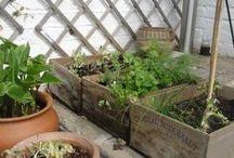 Gardens, Greenhouse & Driveways