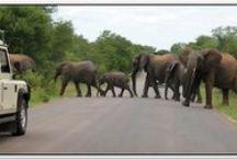 Krugerin luonnonpuisto, Etelä-Afrikka / ETELÄ-AFRIKAN PANORAMAREITTI JA SAFARI KRUGERIN LUONNONPUISTO