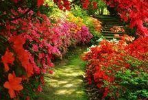 bahçe düzeni / sıkılmadan izle
