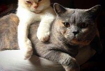 ♥ CATS / von und für Katzen