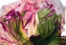 Botanical paintings