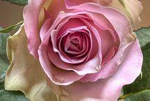 Roses et orchidées, mes fleurs préférées !