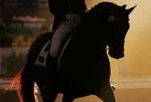Equesterian