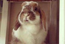 Rabbit / È il secondo amore e di mia figlia ma comunque anche un po' mio si chiama mou e il mio tenero e dolce mumu