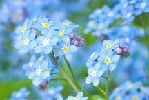 kukkasia/flowers