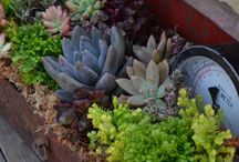 Planters / Flowers / Gardening