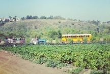 Field Trips Grades K-8 / Southern California places that we take kids for field tirps.