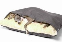 Spoilt Dog (Greyhound) / For when we get our pet woofer