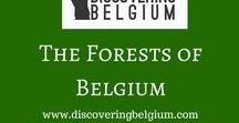 Belgium: Forests / Interesting forests to visit in Belgium. Woodland walks. Forest mountain bike tracks. Wallonia and Flanders. Visit me at https://discoveringbelgium.com/