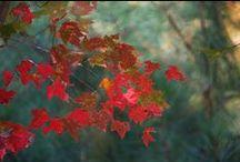 The Seasons: Fall / by melissa