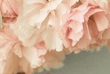 Peach + Coral