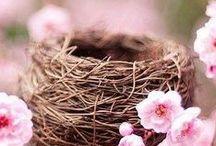 ༺ ♥ Spring ♥ ༻