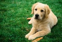 ➤ DOGS
