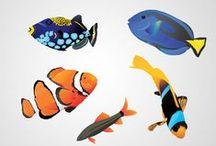 ➤ FISH