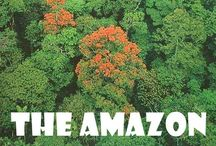 THE RainForest!