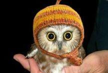 ༺ ♥ Owls ♥ ༻